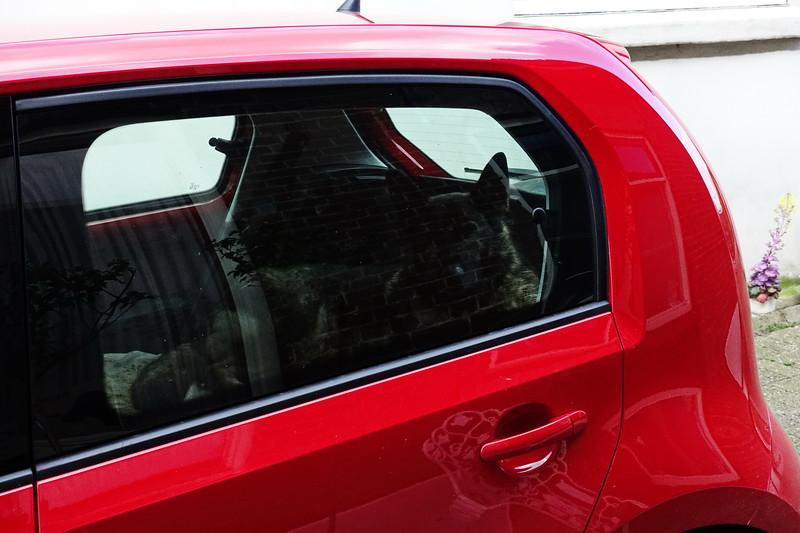 Gina wil even rustig liggen in mijn nieuwe auto