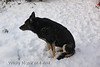 Witchy does not seem to like the snow, she´s too old now I guess