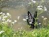 Witchy Capreton <br /> Witchy zwemt iedere dag