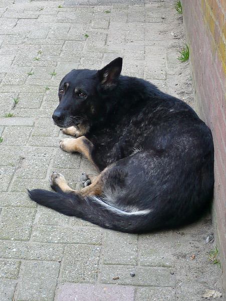Witchy on June 26, 2010, a few months before she died. I miss her so