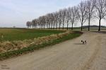 Klein hondje in oneindig landschap